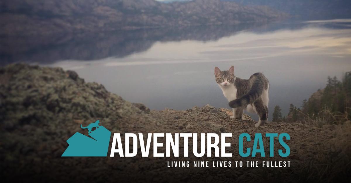 Living Nine Lives to the Fullest
