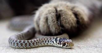 cat with snake