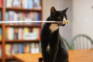 cat following target stick