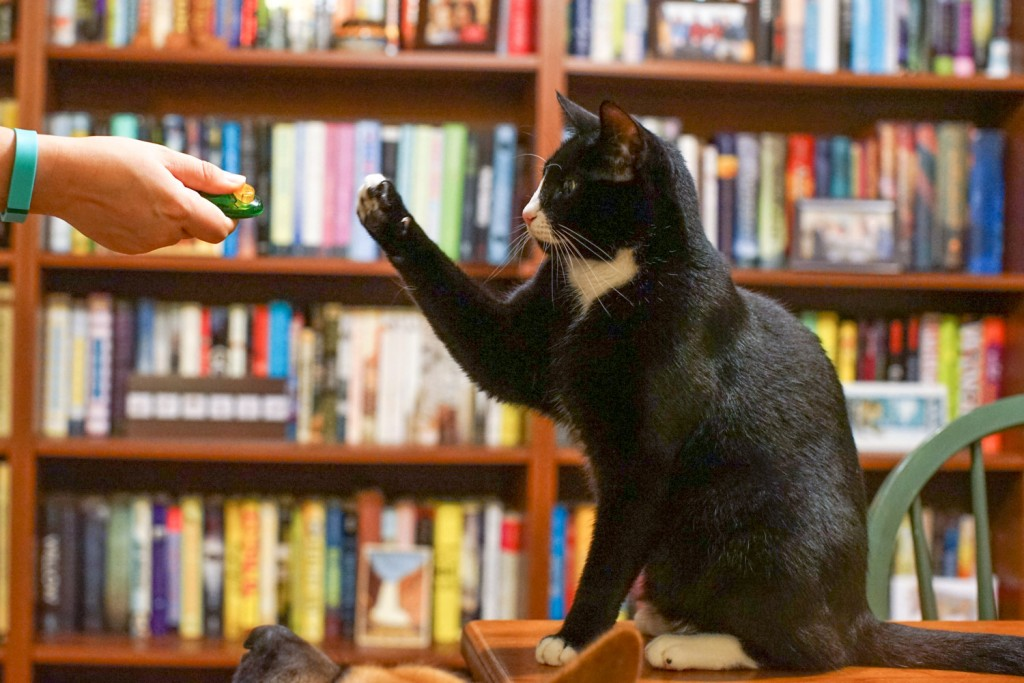cat clicker training