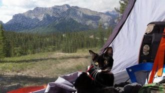 Pistachio the cat camping in Calgary