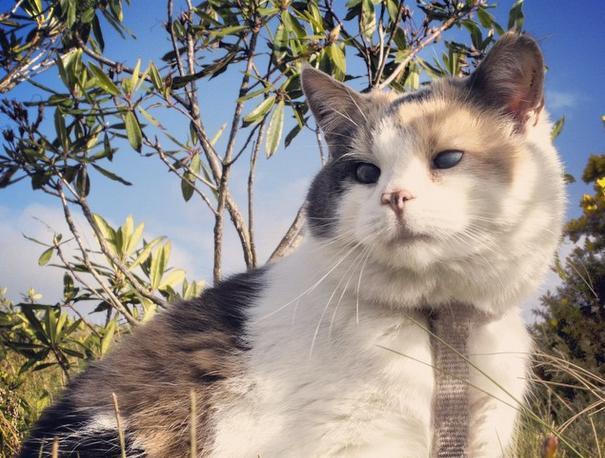 Stevie blind cat