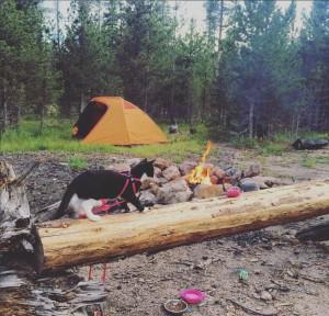 kitten at campsite