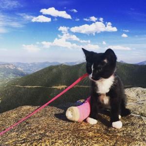 kitten wearing cast