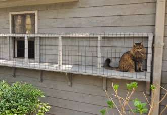 Cat sits in catio.