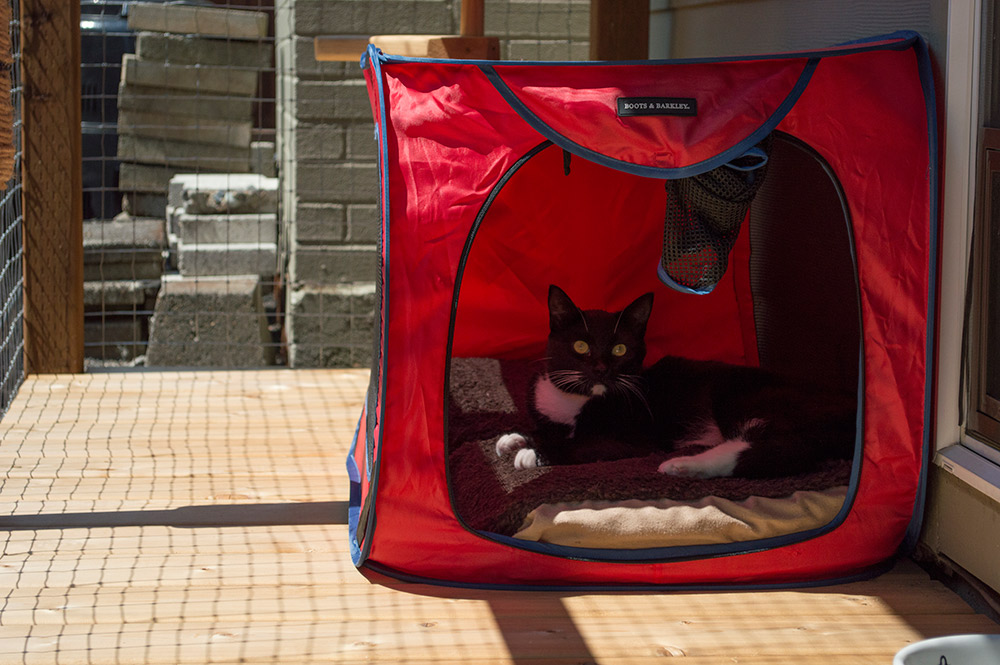 1. Start small. & 7 tips for urban adventures with cats u2013 Adventure Cats