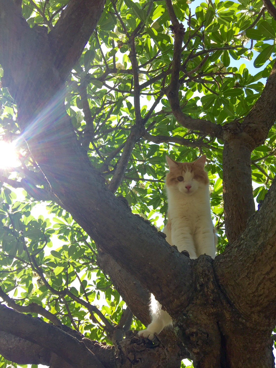 Nanakuli the cat in a tree