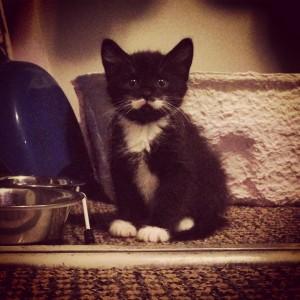 kitten with moustache