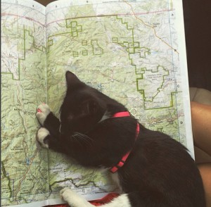kitten asleep on map