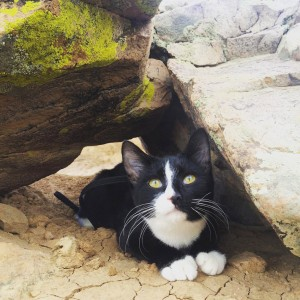 kitten hiding under rocks