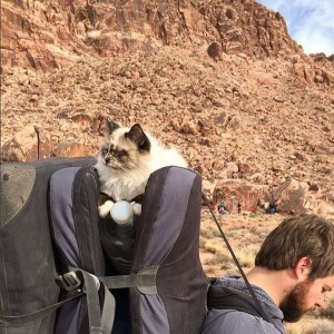 Zhiro the cat riding on climbing pads