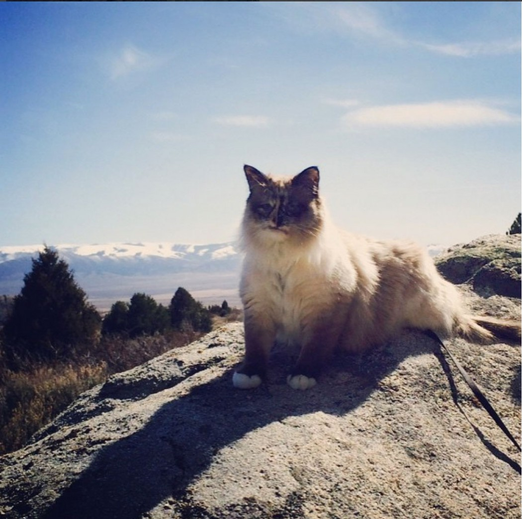 cat atop mountain
