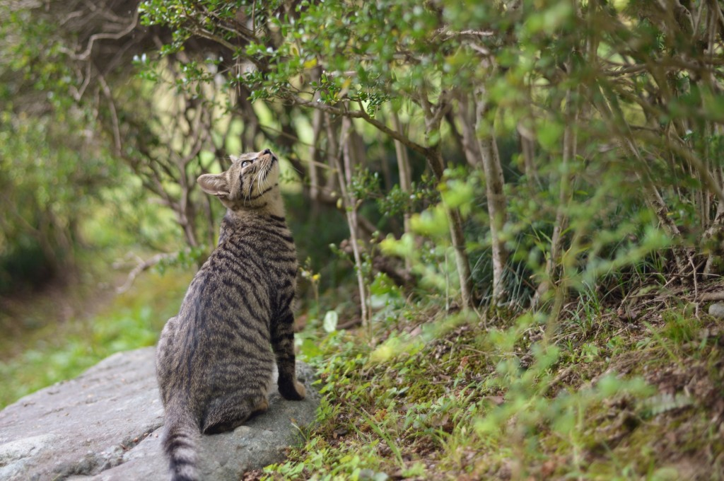 Bengal scouting a tree