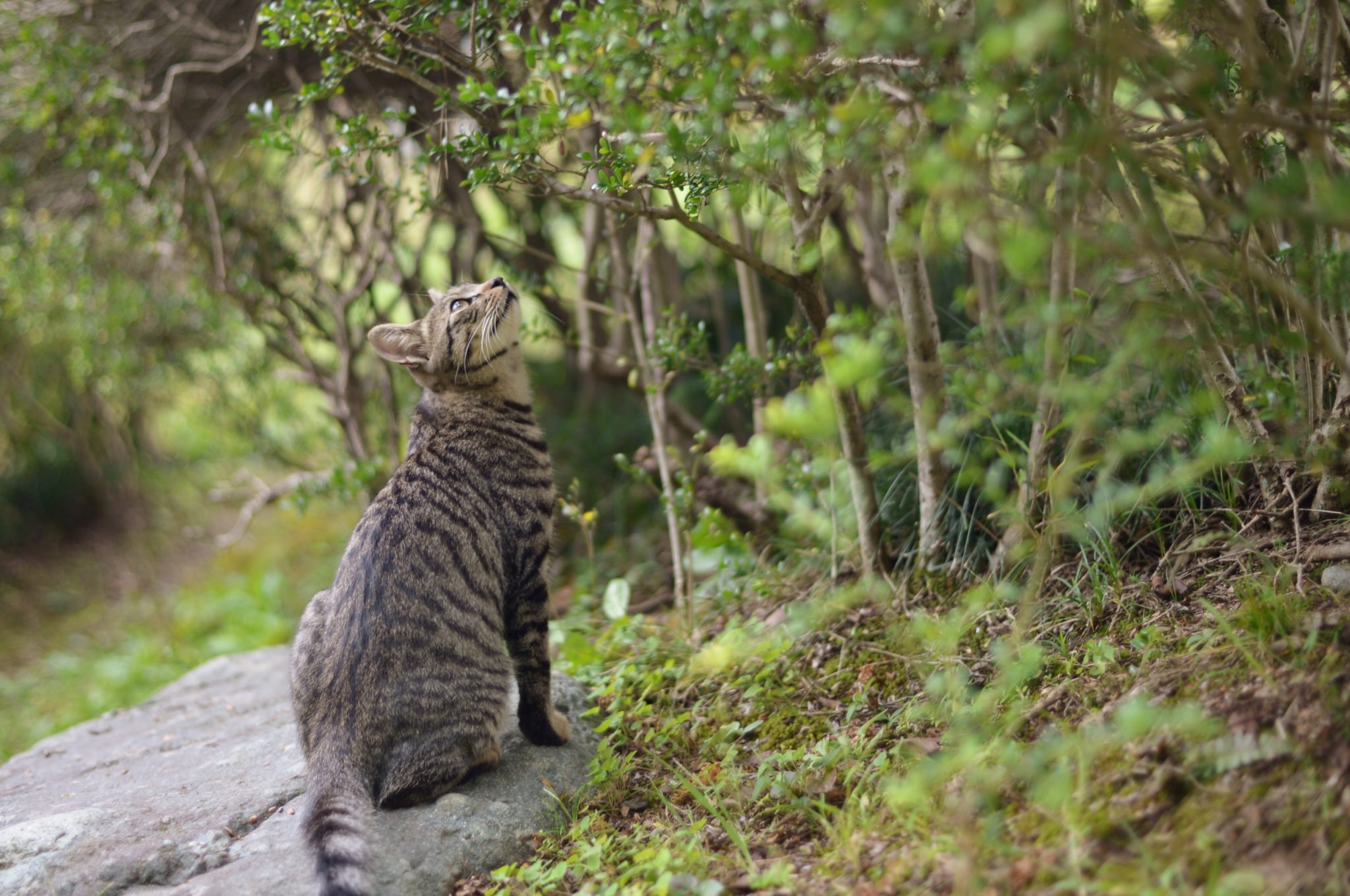 Dont let your cat eat these toxic plants adventure cats bengal scouting a tree buycottarizona