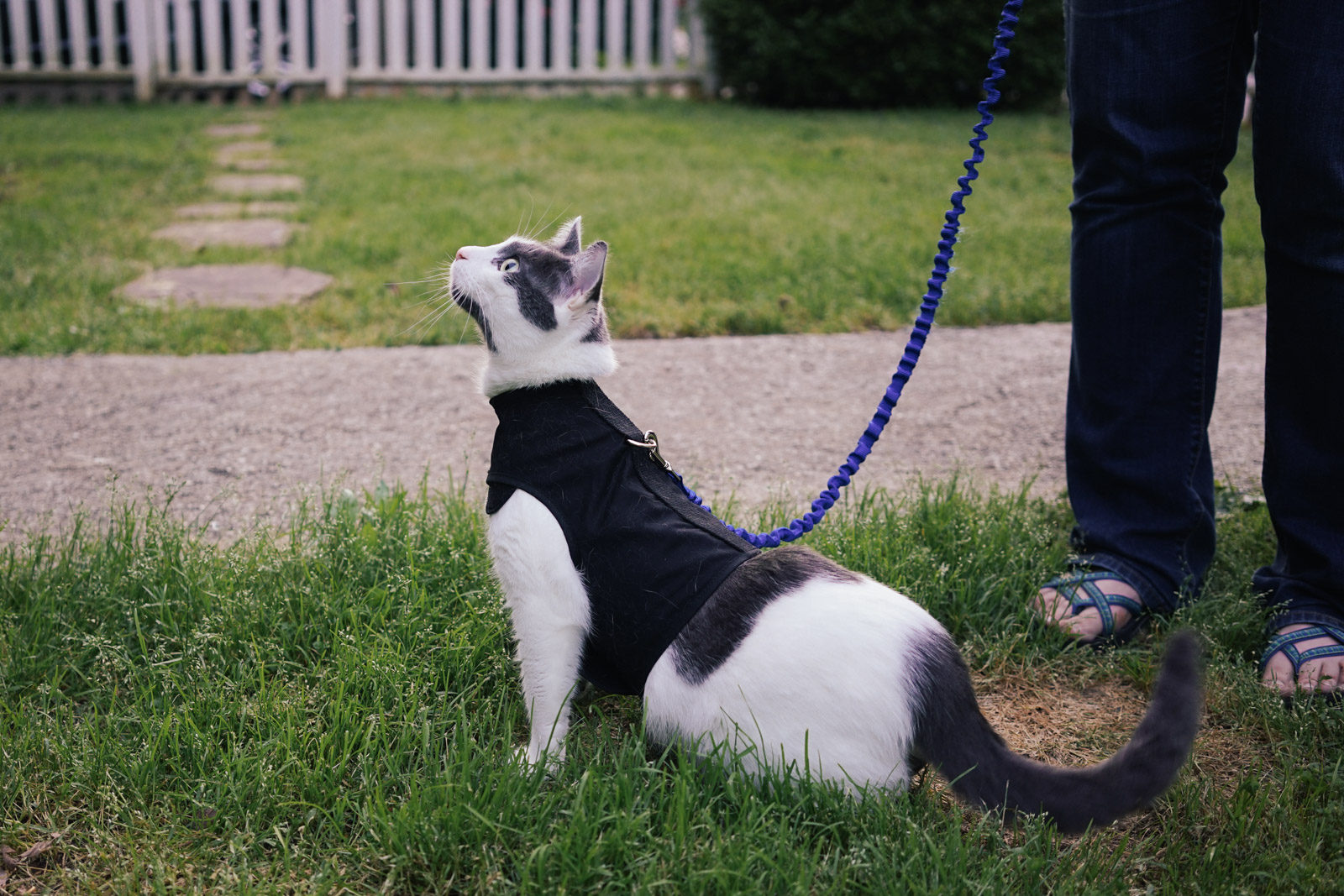 Cat Wearing Walking Jacket And Leash