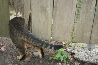 Cat sneaks through a fence