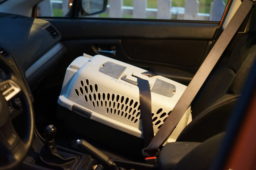 cat carrier with seat belt