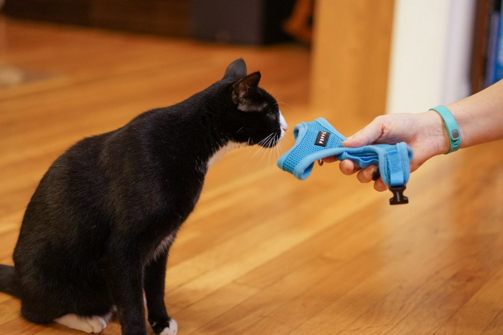 cat sniffing harness