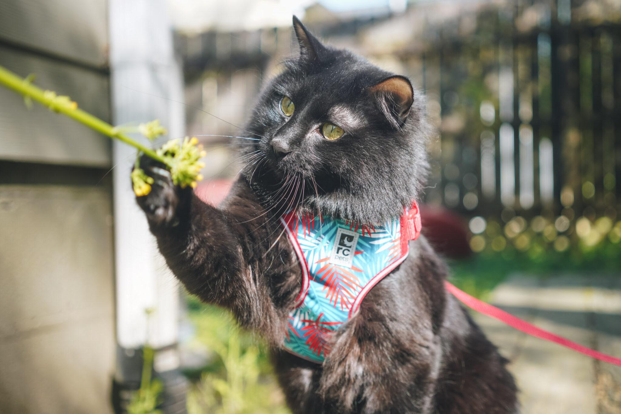 RC Pets Adventure Kitty Harness Maldives