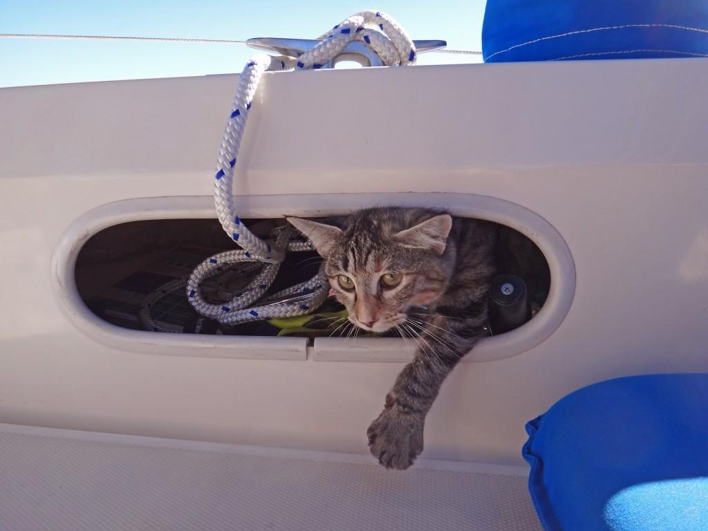 Georgie sailing cat in porthole