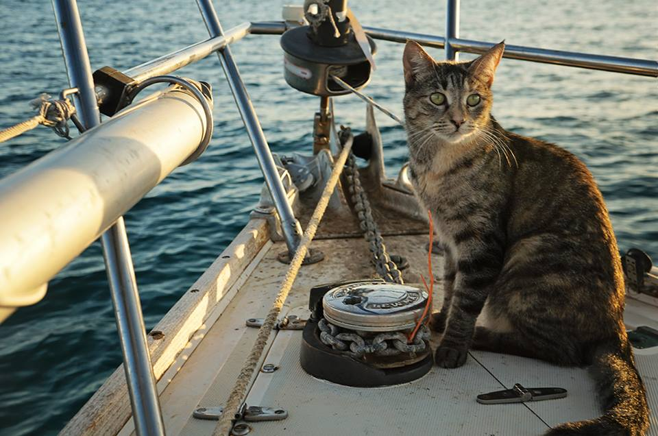 Image result for sailing cat