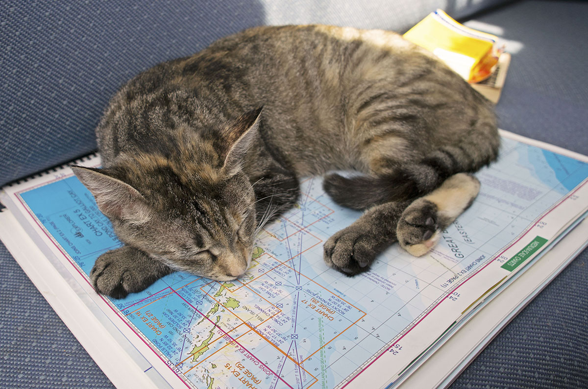 Georgie Boat Cat on Chart
