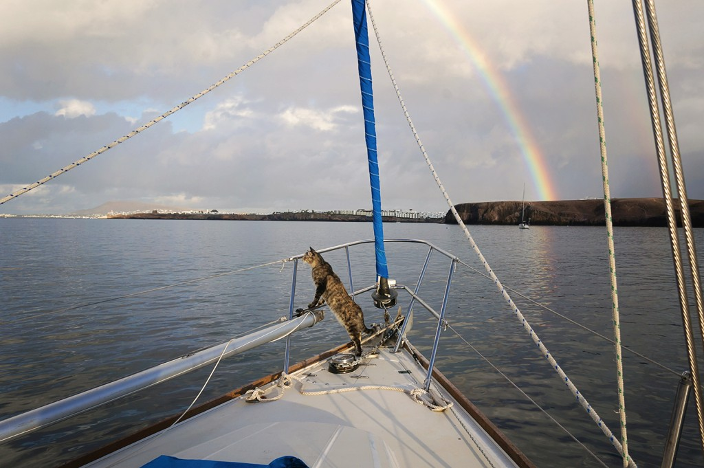 Georgie Boat Cat and Rainbow