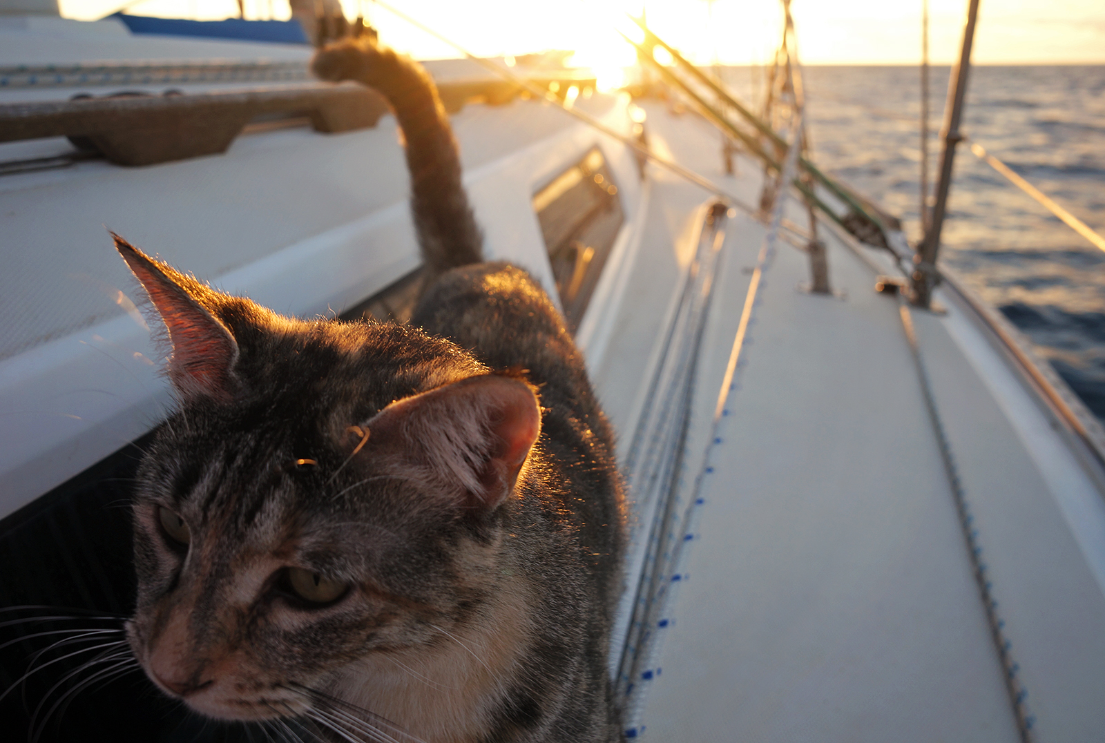 Georgie boat cat on starboard