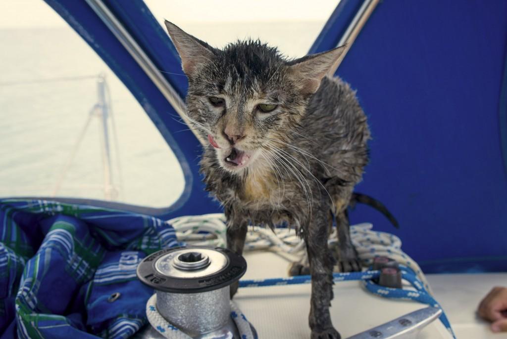 Georgie Boat Cat Wet