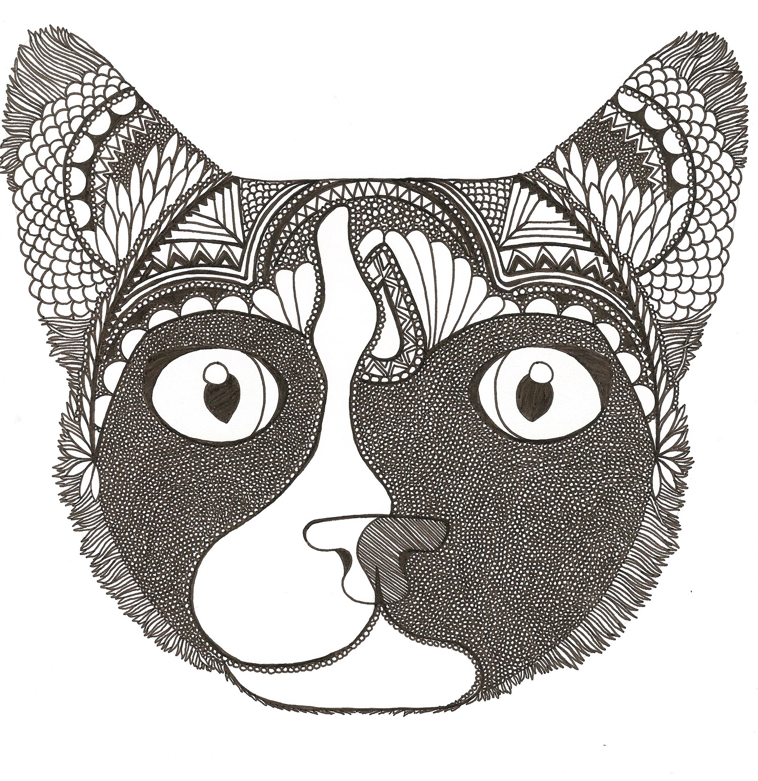 Liz Cox illustration of Quandary cat