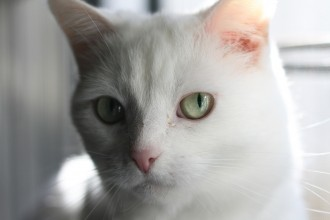 Cats with fine hair and cats with light hair are at greater risk of getting sunburned outside.