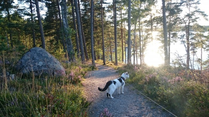 cat on leash hiking