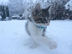 kitten playing in snow