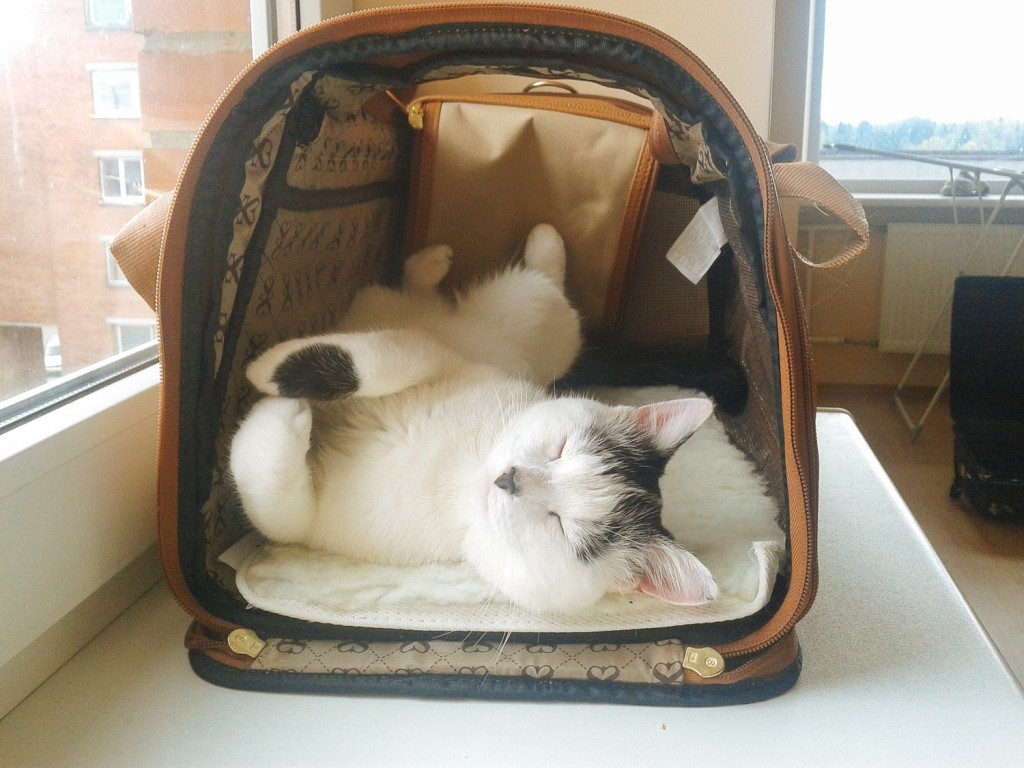 Yuki the cat in cat carrier
