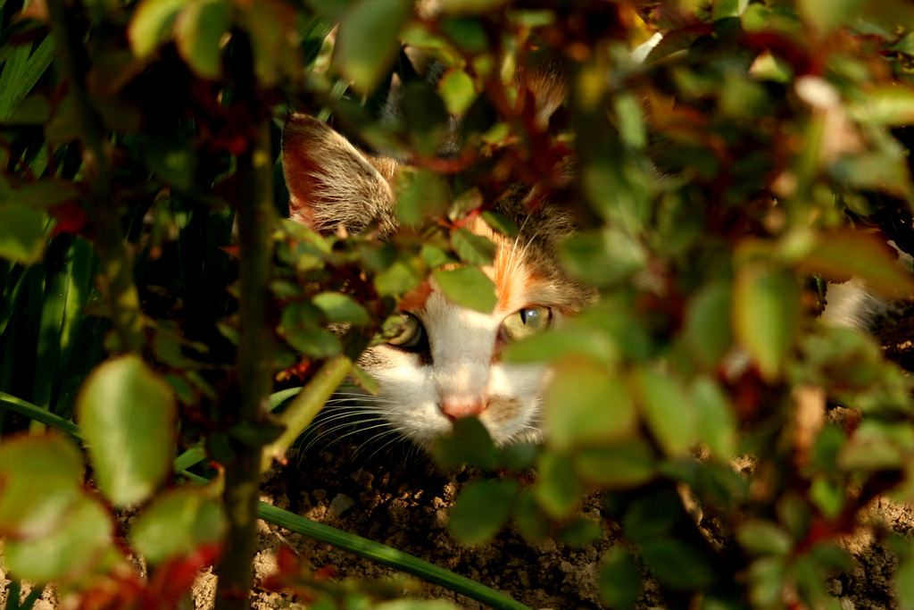 A calico cat hides in the foliage, almost perfectly camouflaged