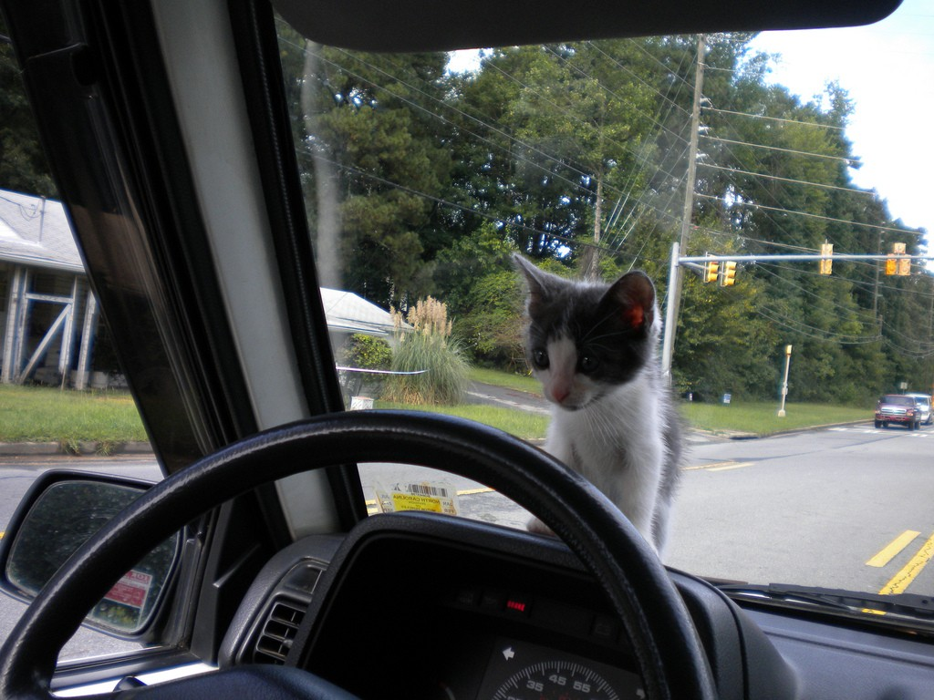 kitten on dashboard