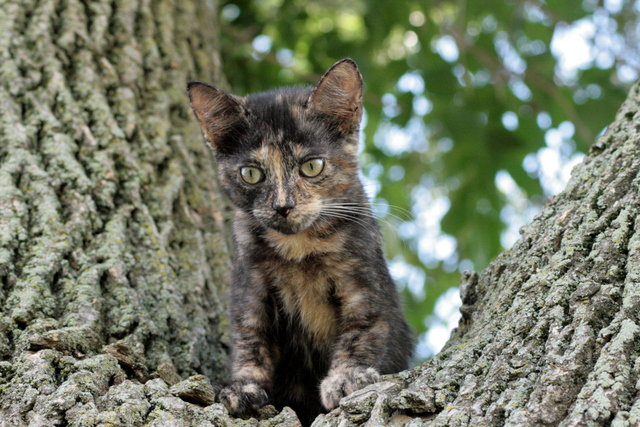 Kitten is all the way up in a tree