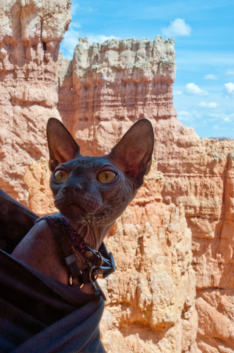 Omar peeks out of his carrier at Bryce Canyon National Park in Utah.