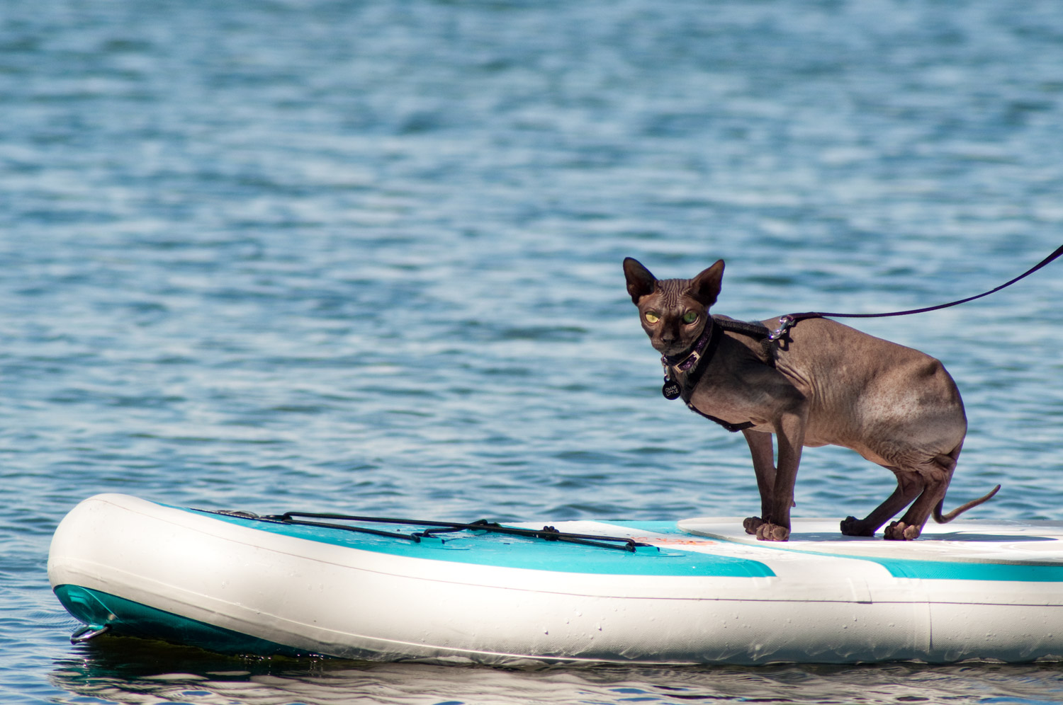 Omar doesn't mind water ??he's right at home on the paddleboard.
