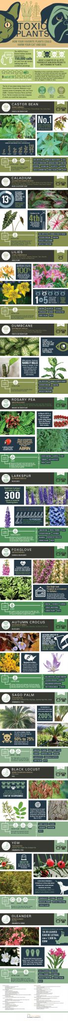 plant-infographic