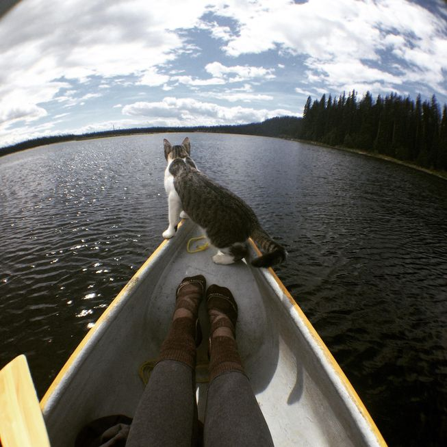cat riding in canoe