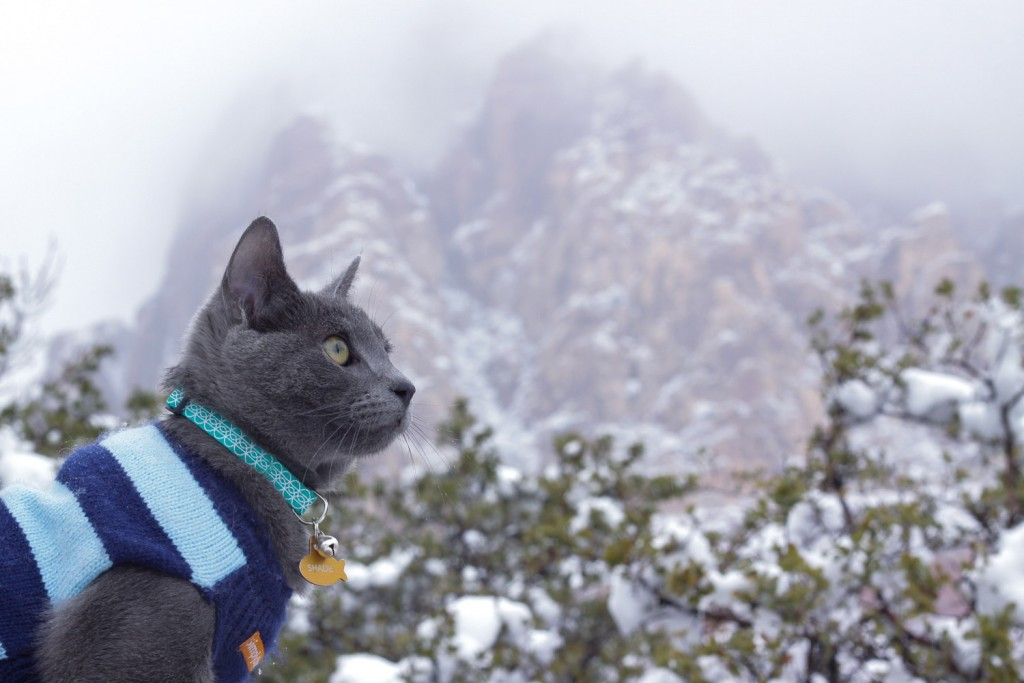 Shade the cat by snowy mountain