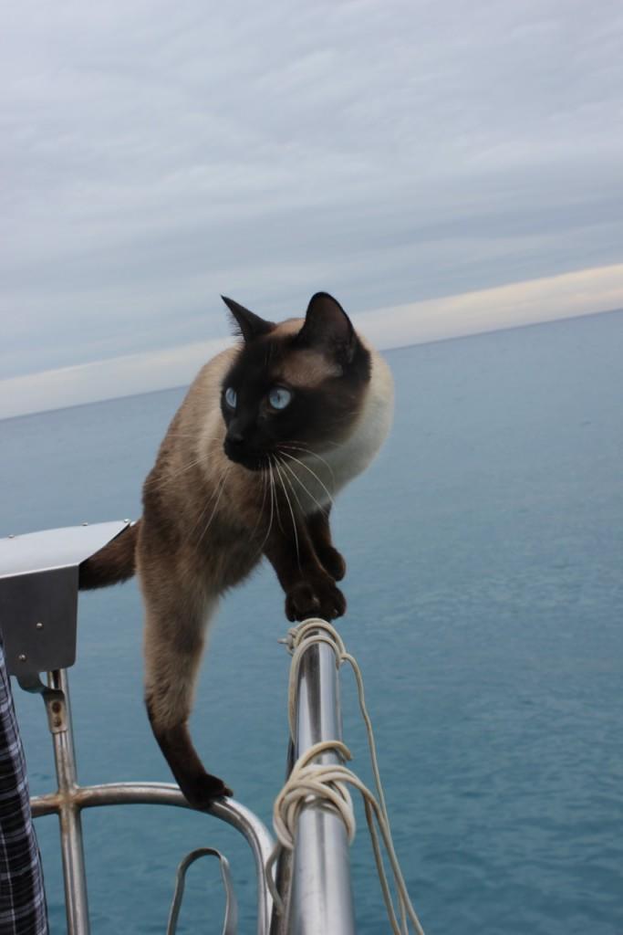 Boat cat looks at ocean