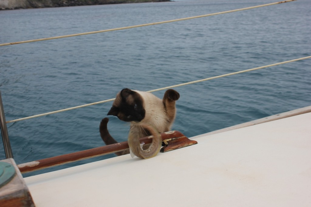 Boat Cat Climbs Aboard