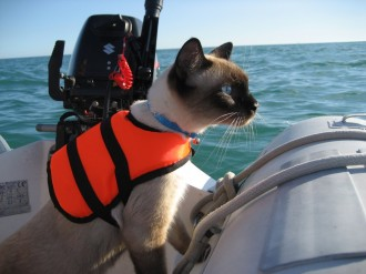 Bailey Boat Cat On board