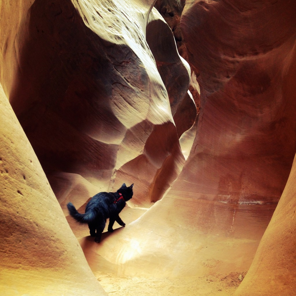 Millie the cat walking through canyon