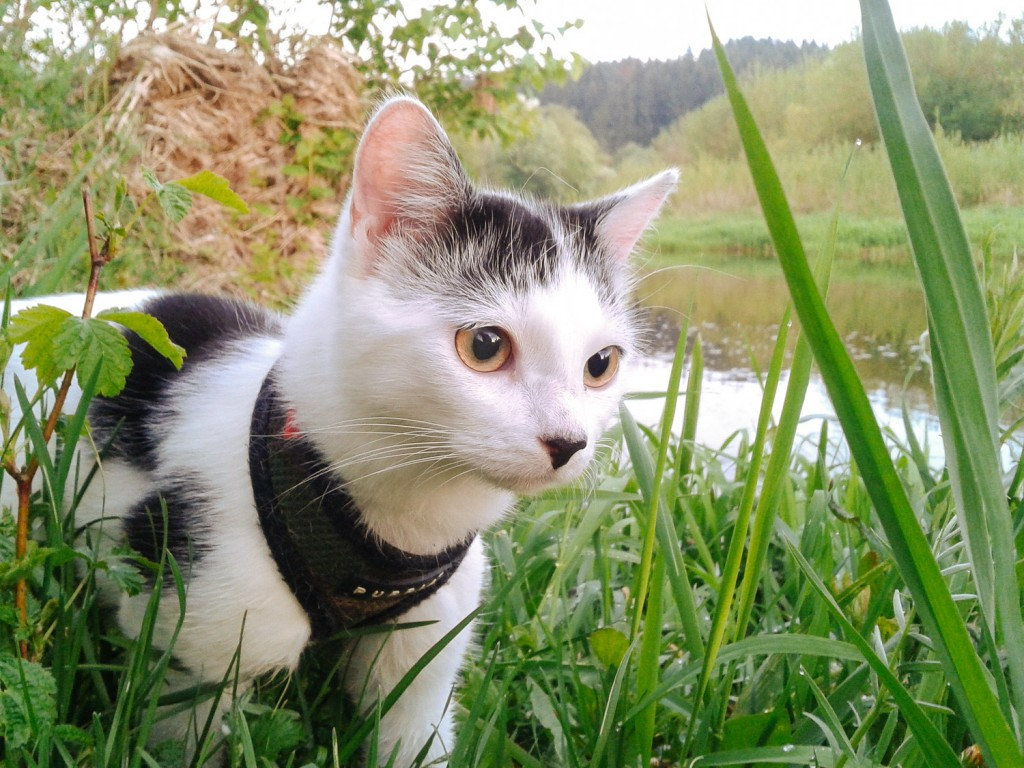 3 Essential Steps To Make Your Cat An Adventure Cat