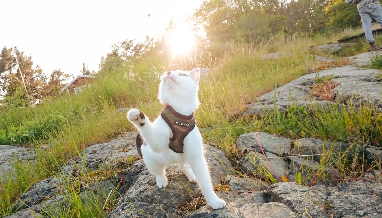 Puppia cat harness