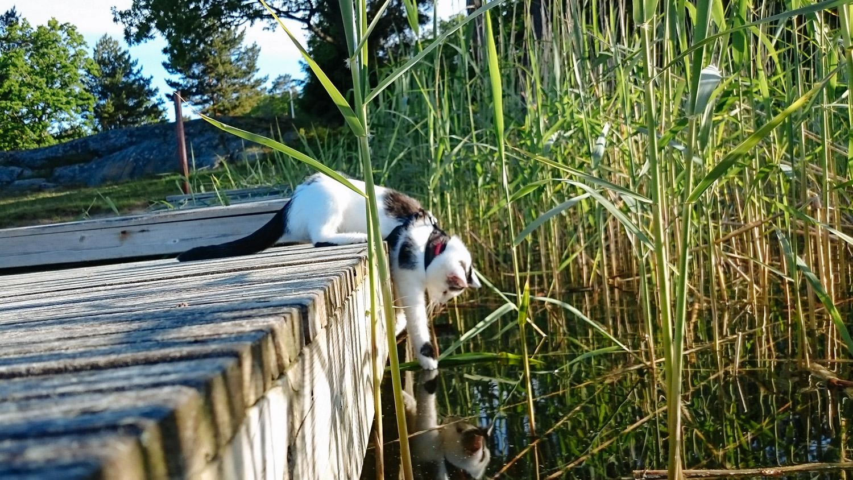 adventurecat-yuki (29 of 118)