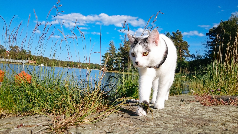cat walking along shore